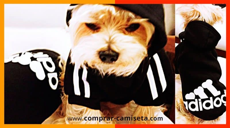 comprar ropa para perros: camisetas, abrigos, chalecos, chubasqueros, impermeables...